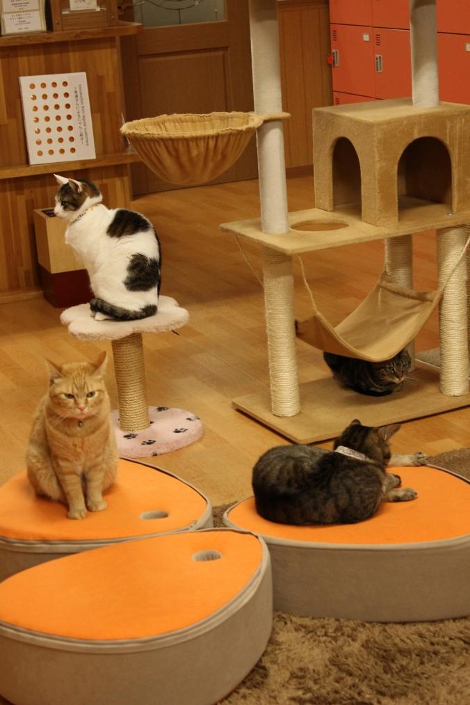 Échantillon de chats