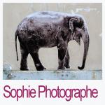 Sophie Photographe