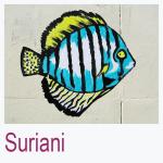Suriani